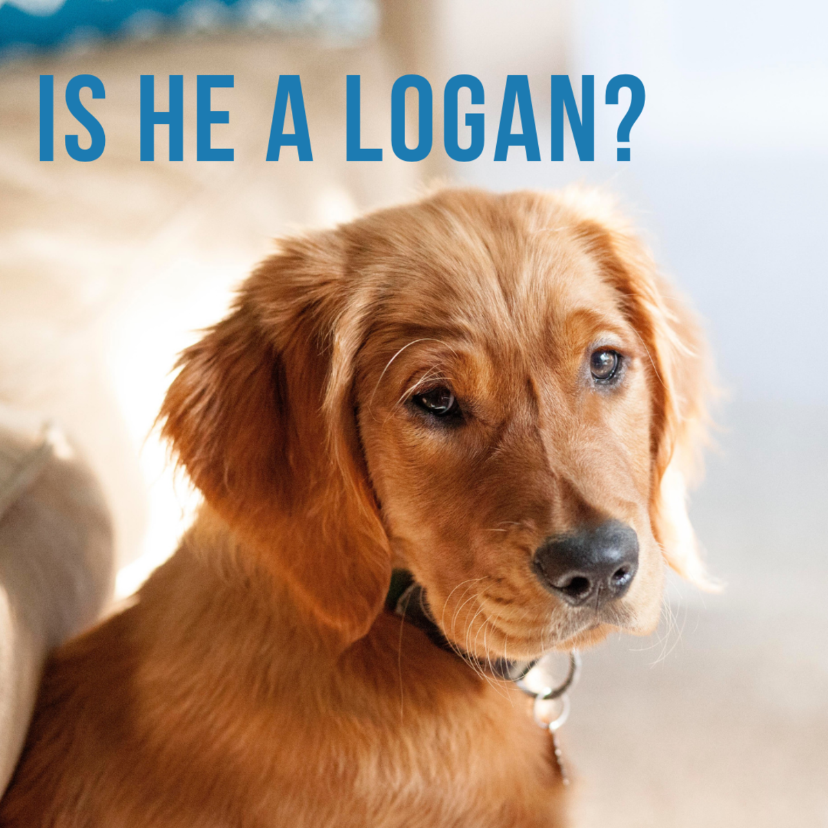 Is he a Logan?