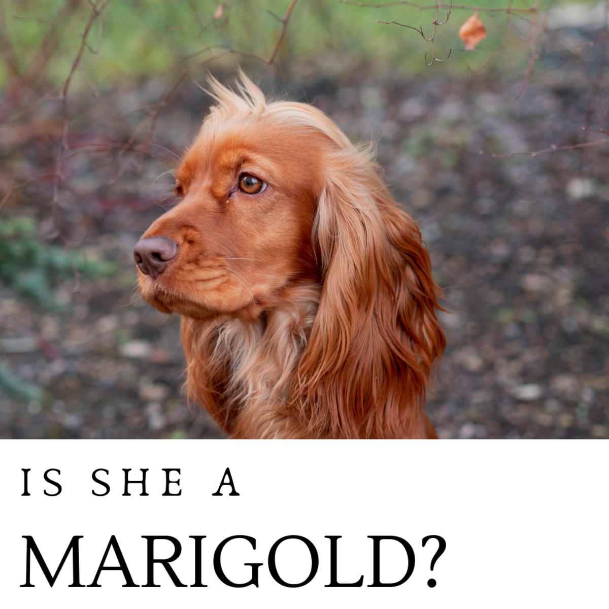 Is she a Marigold?