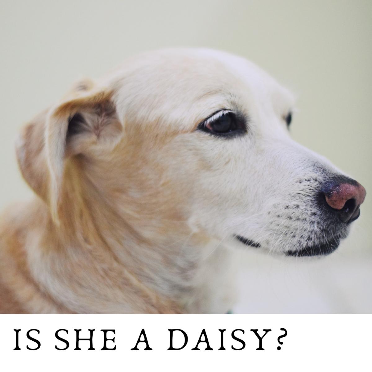 Is she a Daisy?