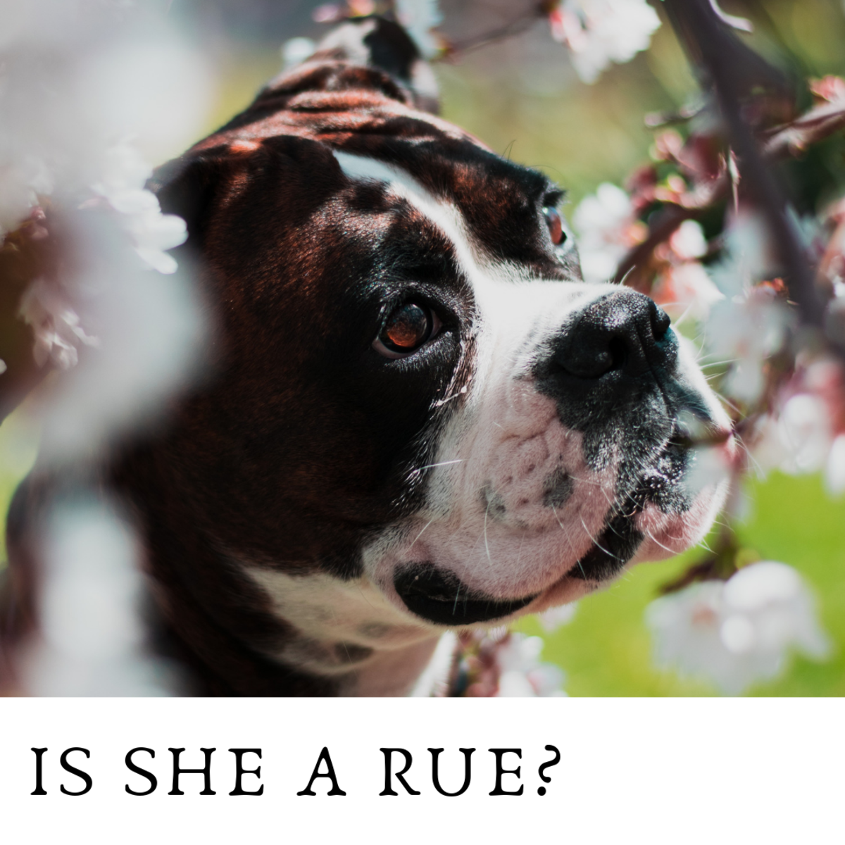 Is she a Rue?
