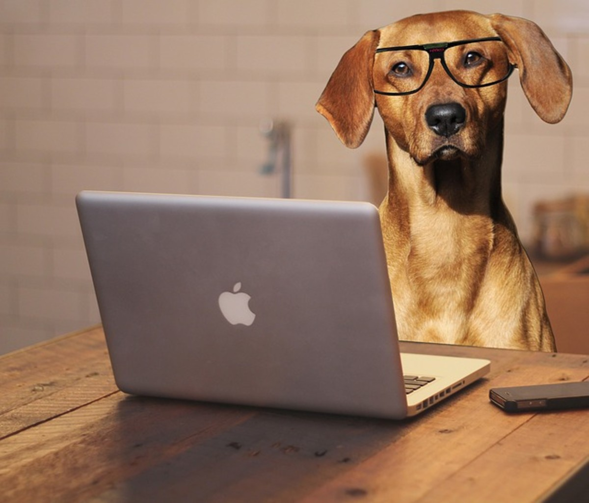Nerdy dog with glasses on using Mac computer