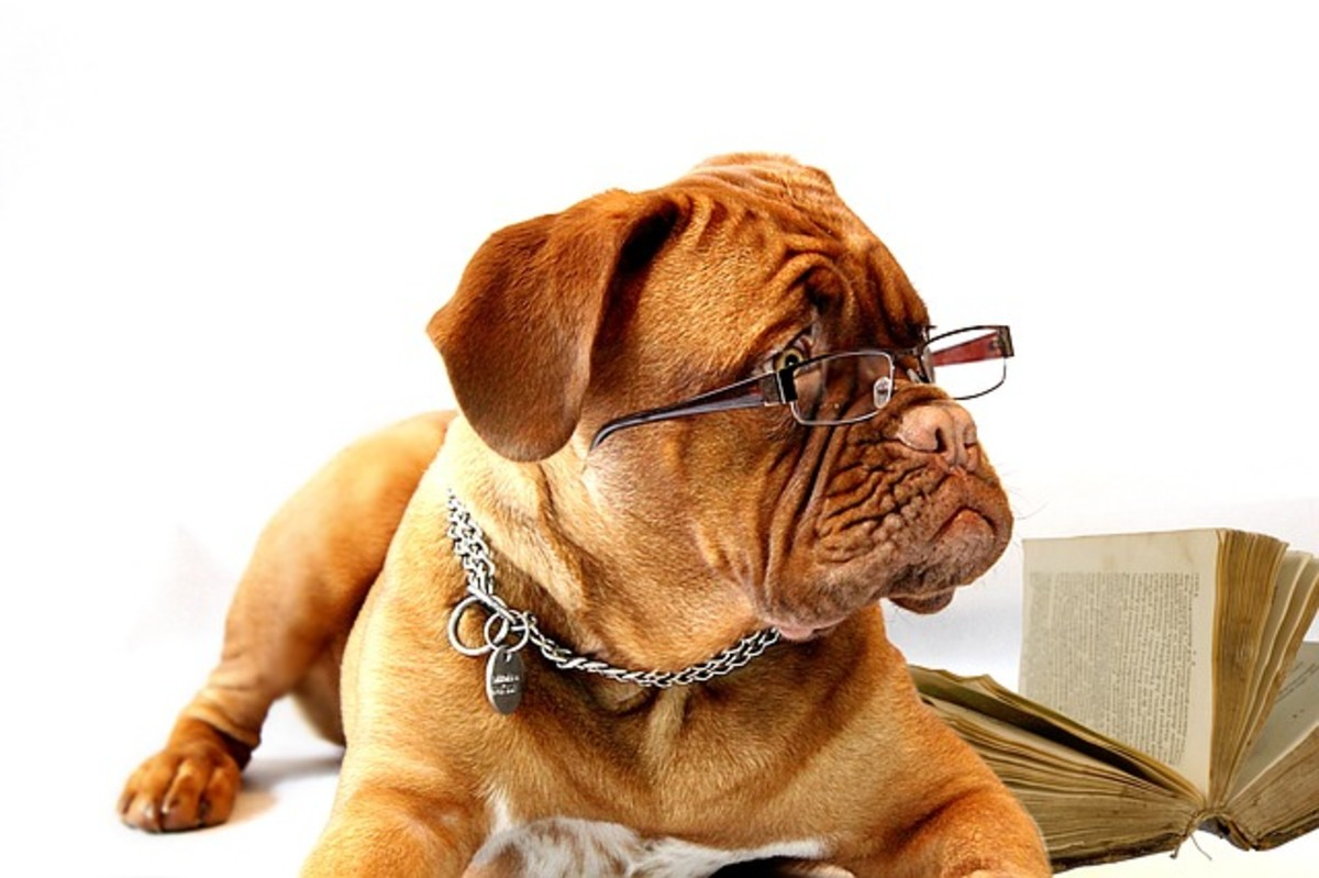 Dog with glasses on reading book