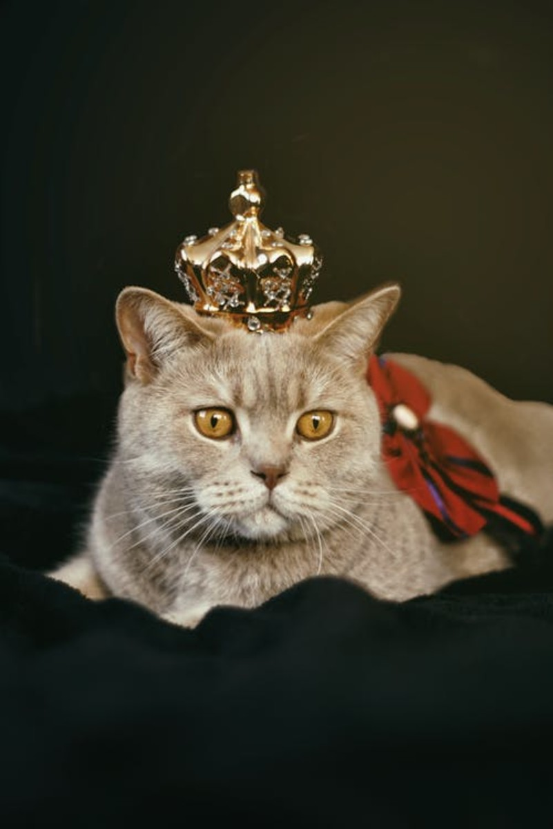 Feline royalty embodied!