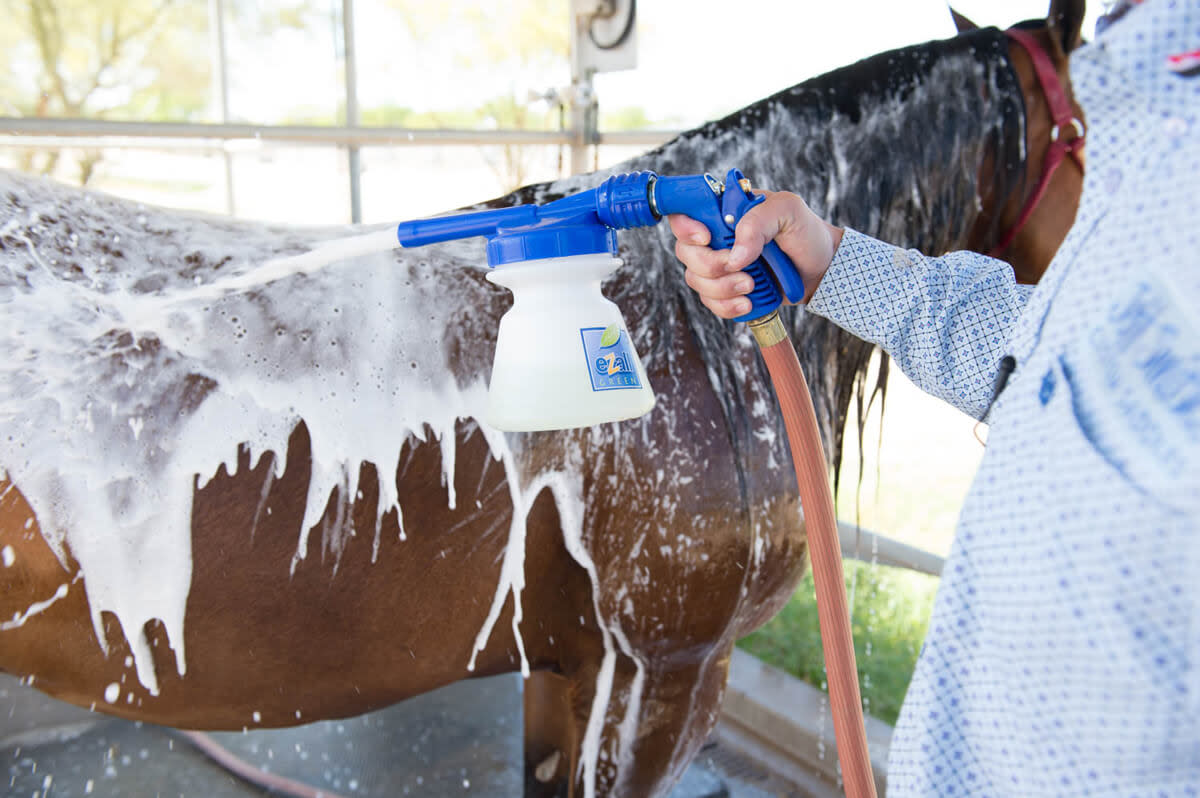 is-it-warm-enough-to-bathe-my-horse