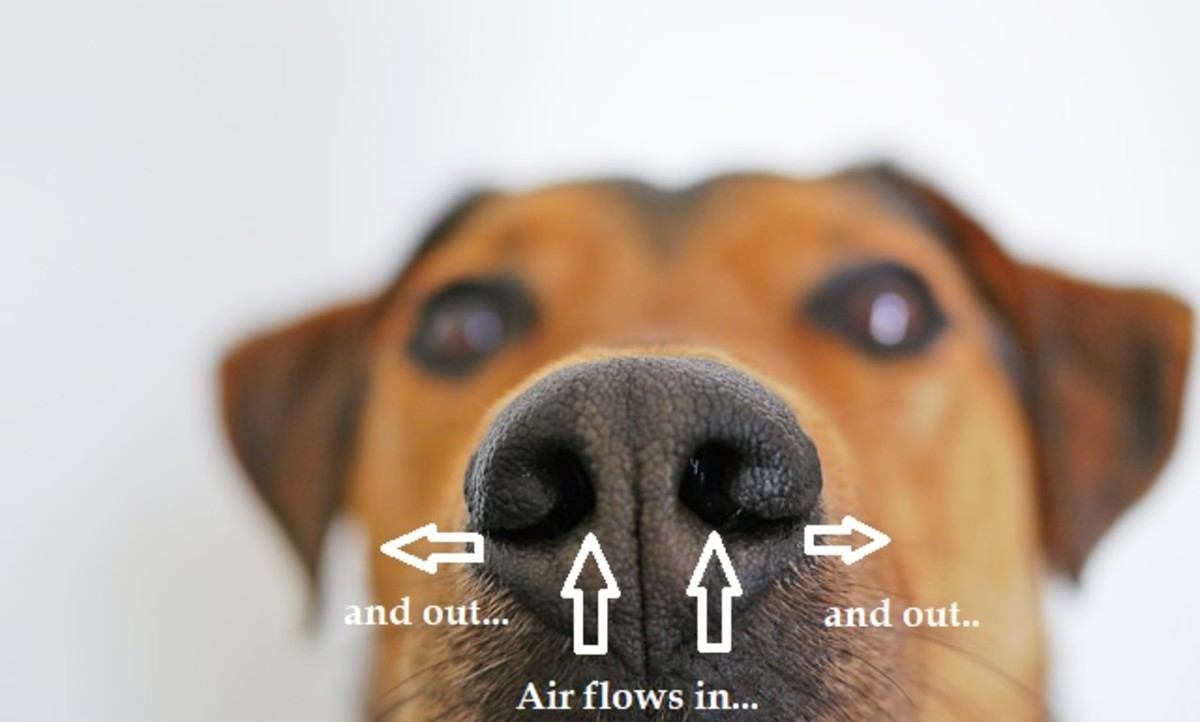 Those slits at the side of your dog's nose have a function!