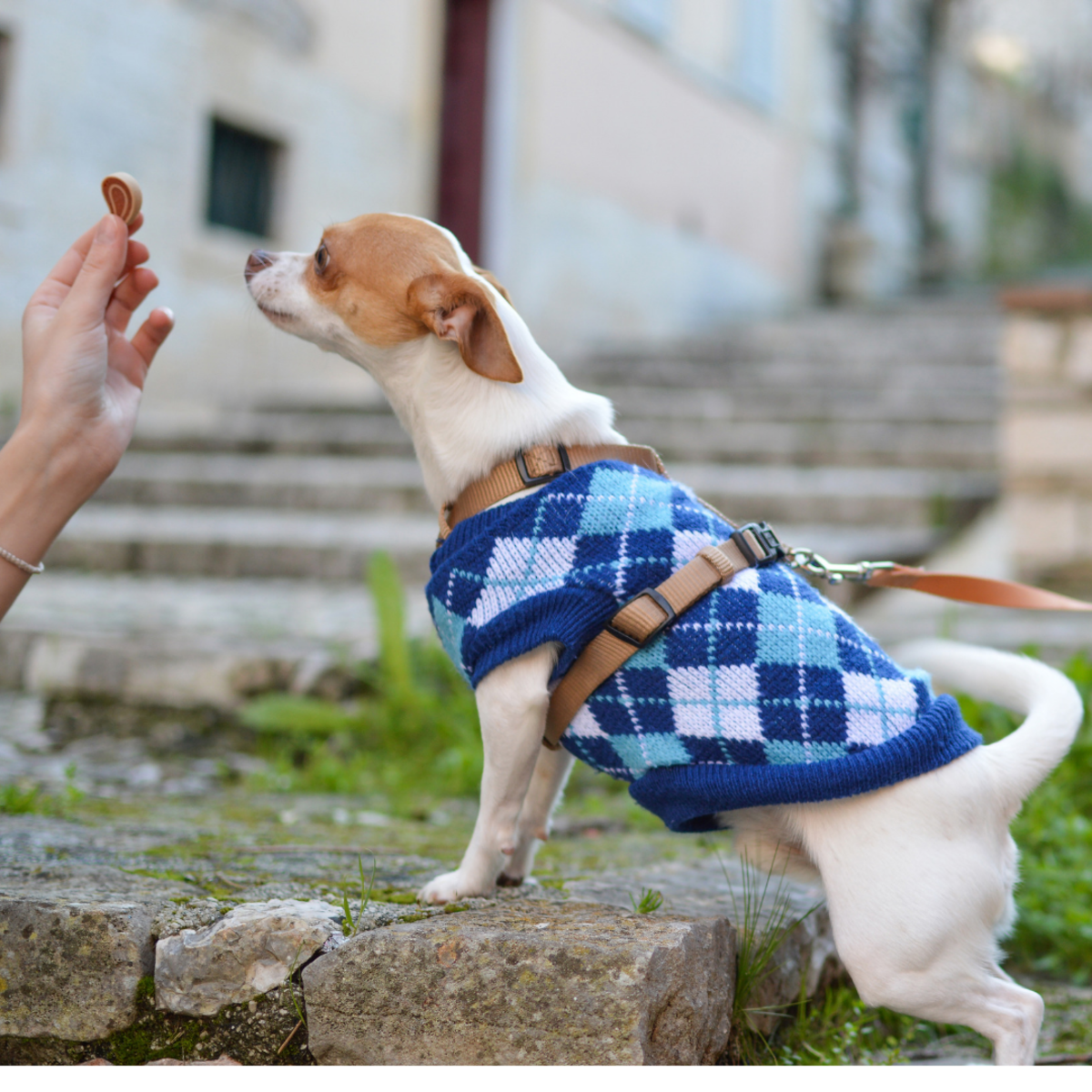 Learn how to approach dogs properly.