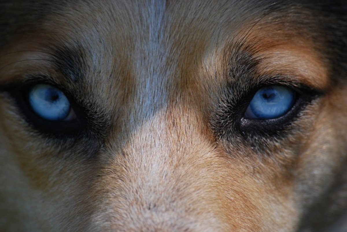 Blue eyes are an optical illusion.