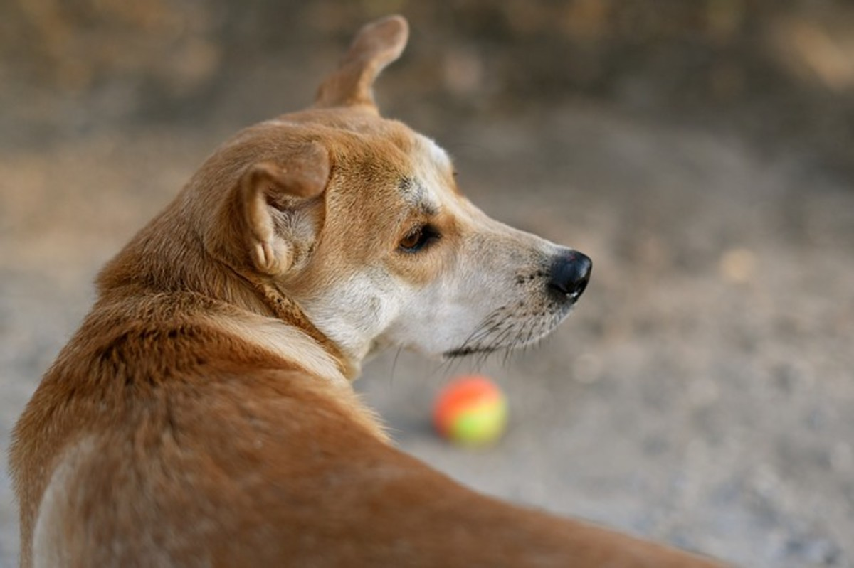 Ever wondered why your dog doesn't see that toy right in front of his nose?