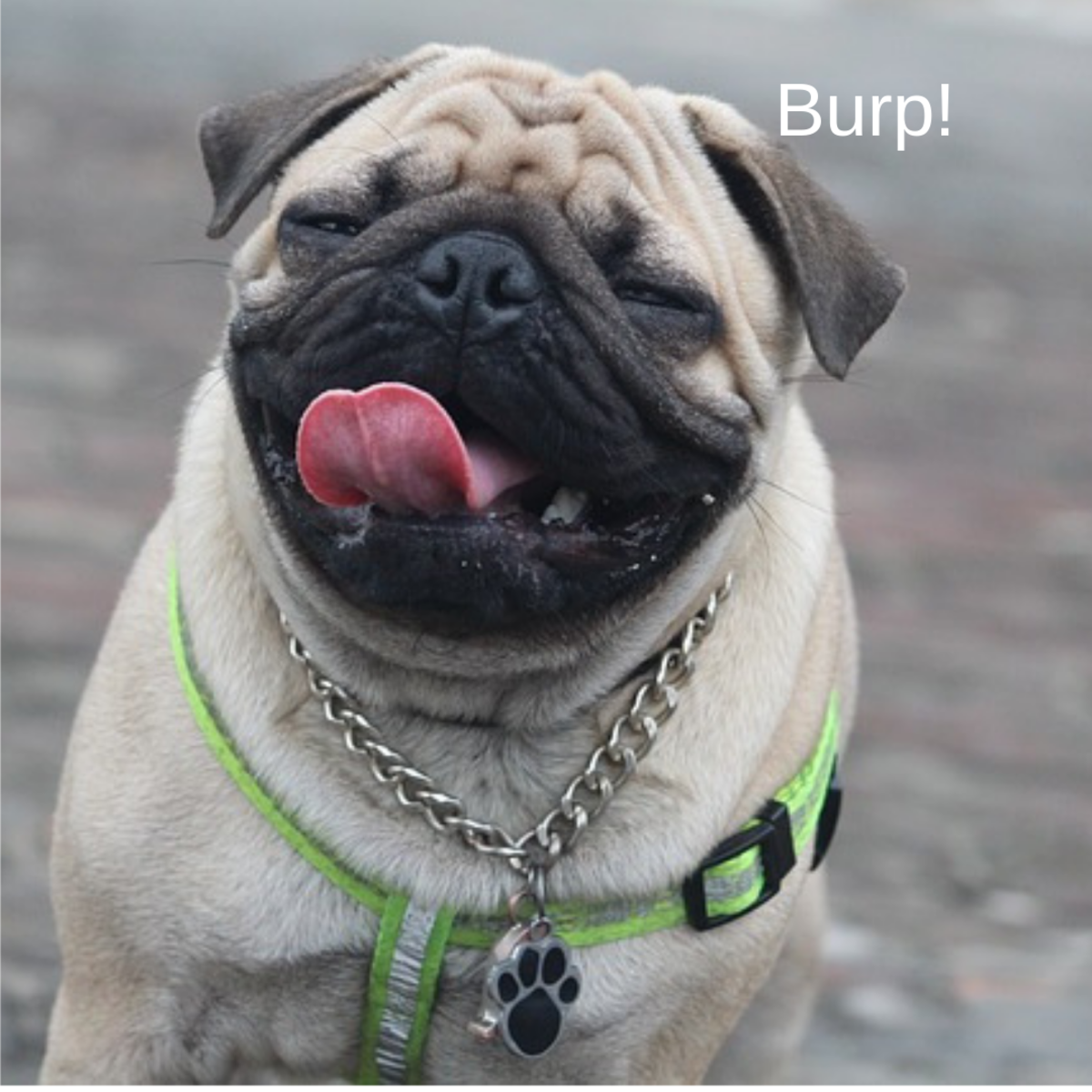 Some dog burps are simply the result of eating too fast.