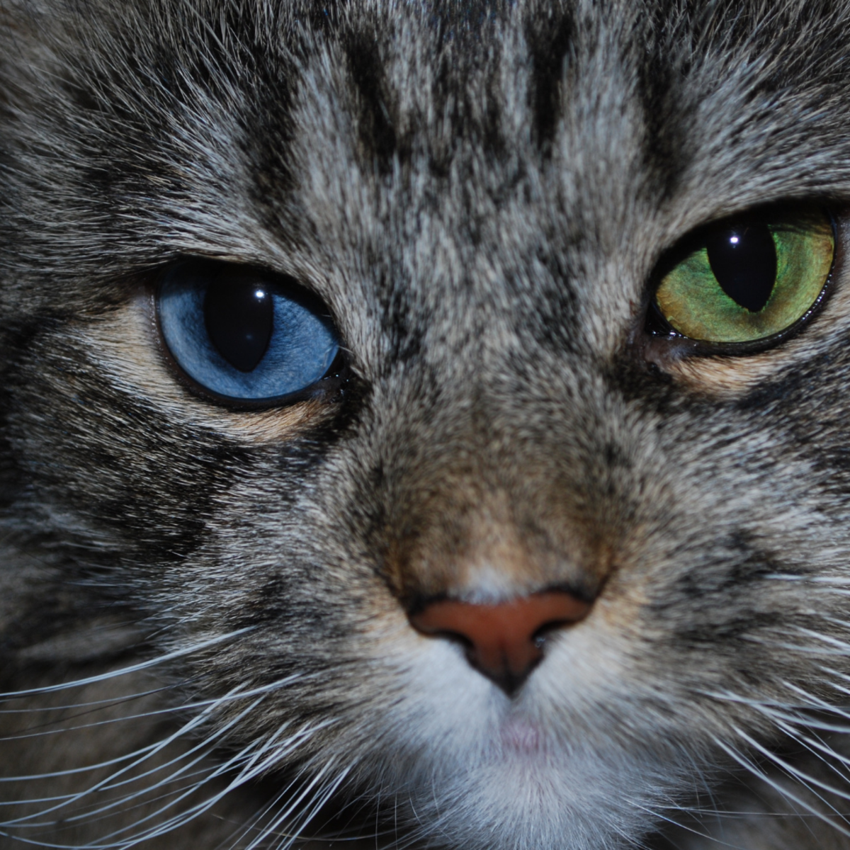 Is your cat an Opal?