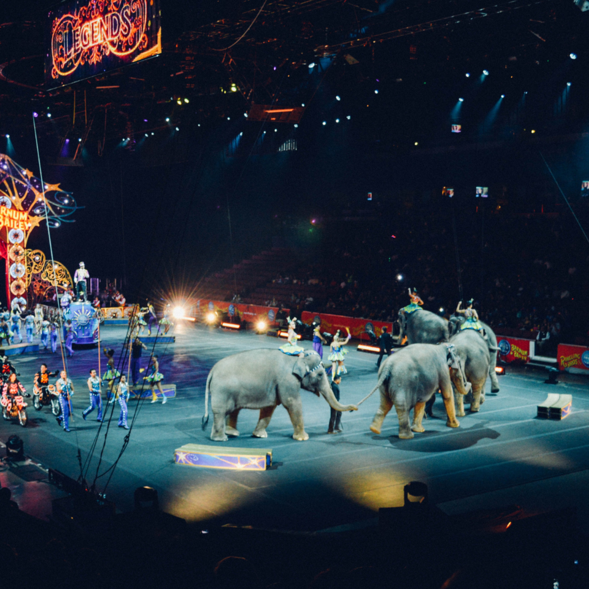 Circuses violate many animal rights.