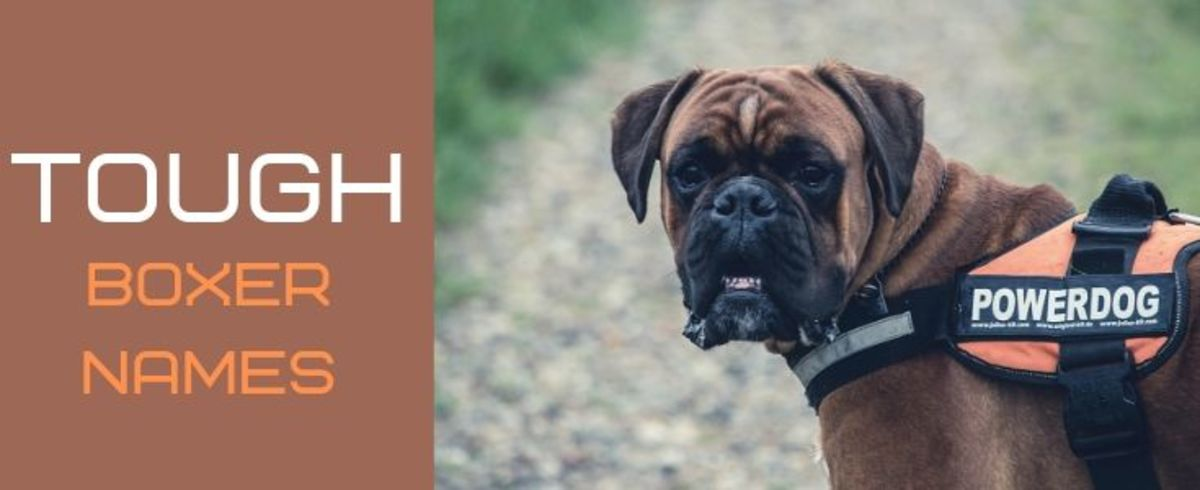 boxer-dog-names