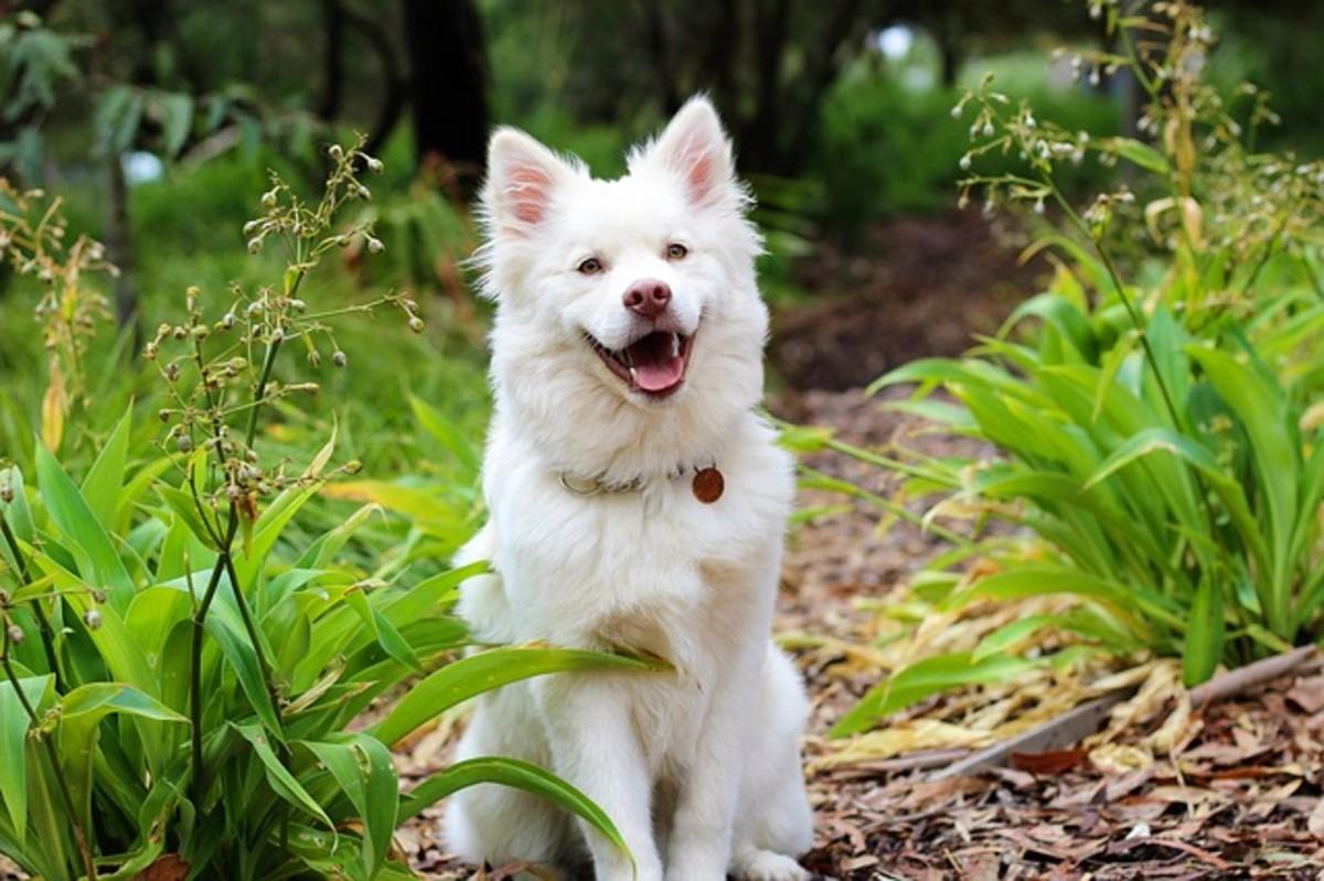 Cute White Dog Sitting