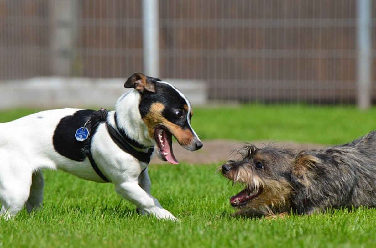 Two puppies playing together