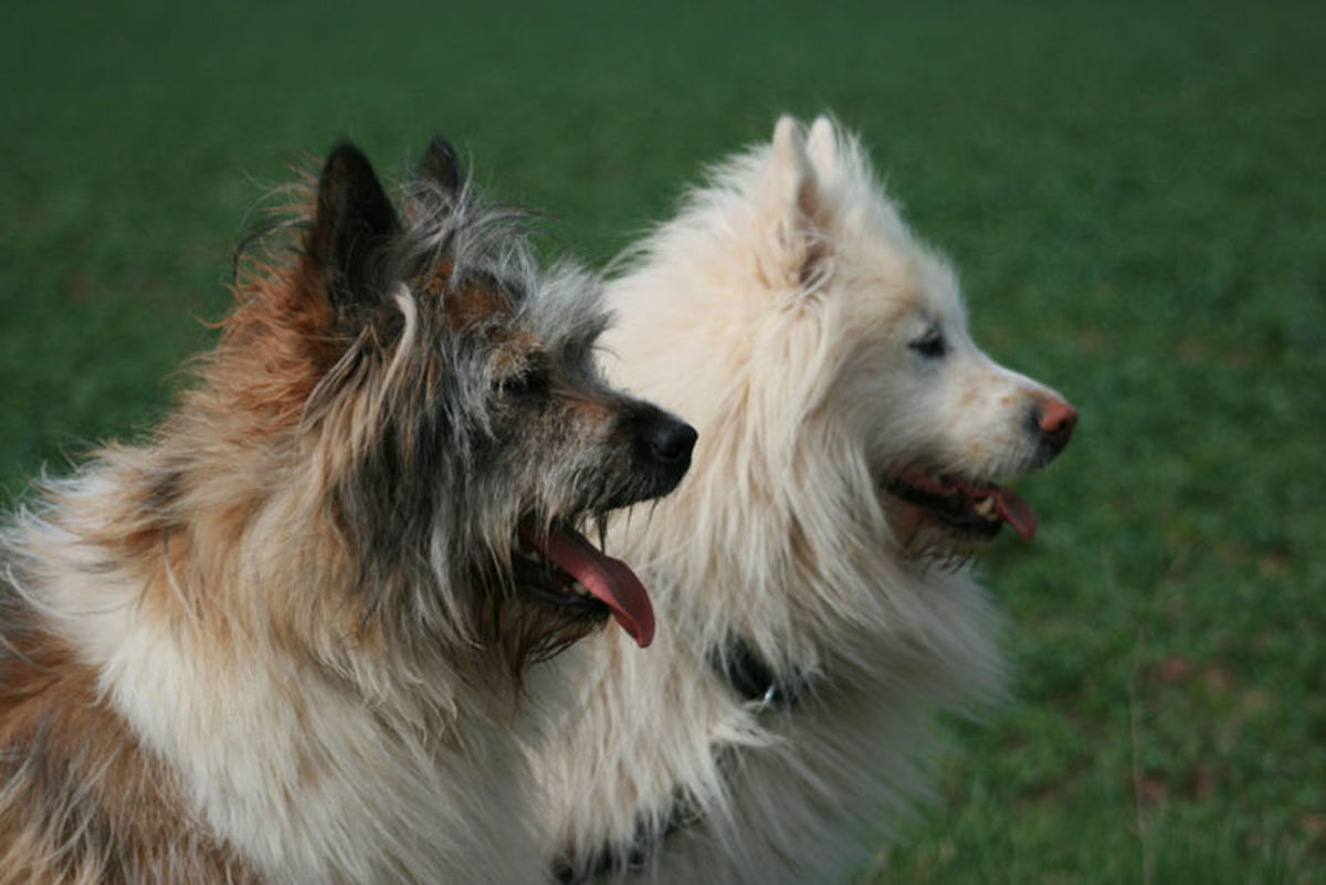 names-for-two-tone-and-split-face-dogs