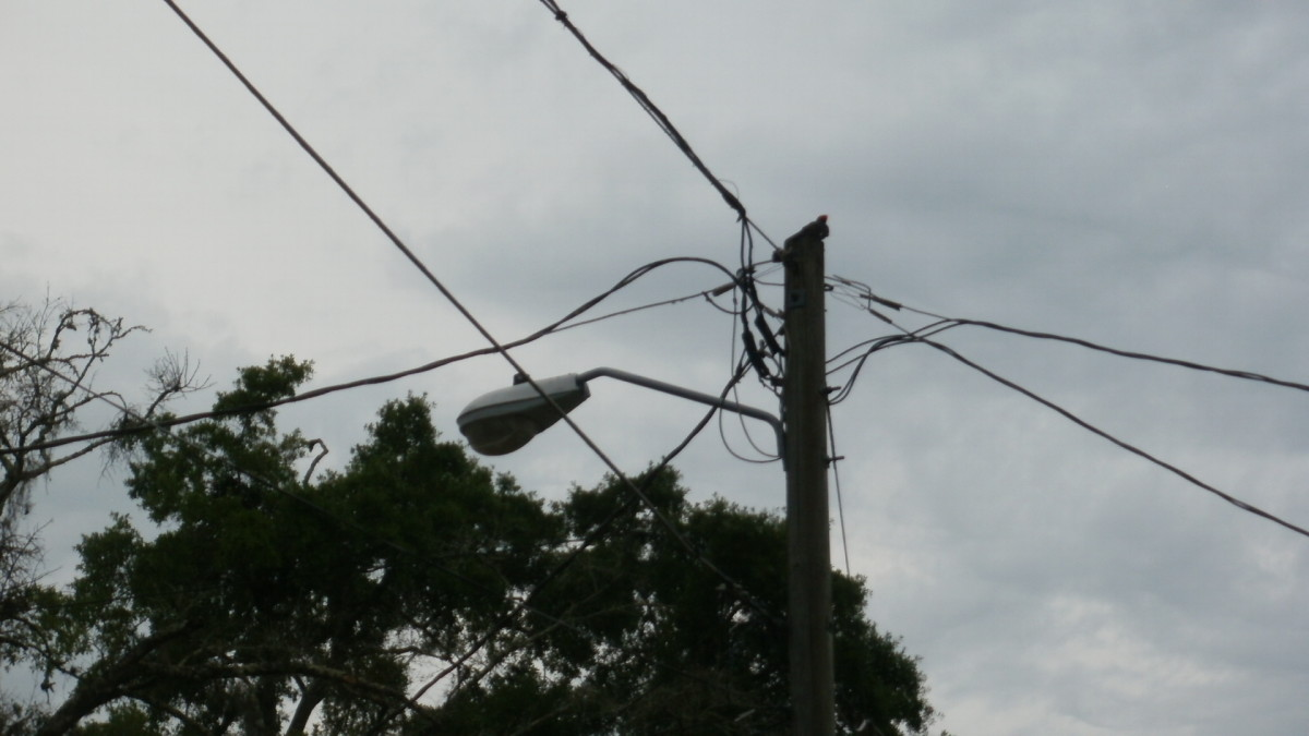 Pileated Woodpecker on top of utility pole