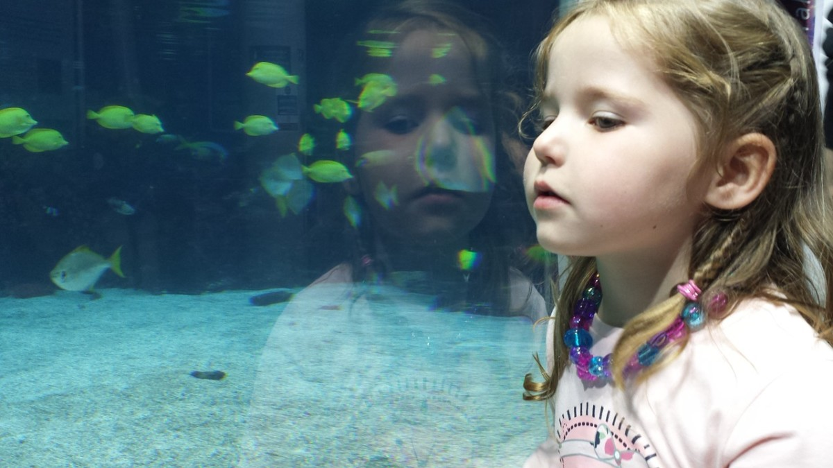 Children have a natural fascination with fish. This should be channeled in a good way, like helping a parent with aquarium chores.