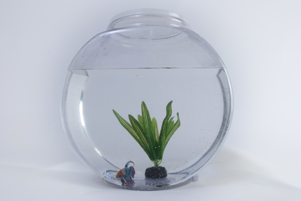 Larger aquariums have their weaknesses, but small fishbowls are particularly vulnerable. They are lightweight and can easily be knocked over or off their perch.
