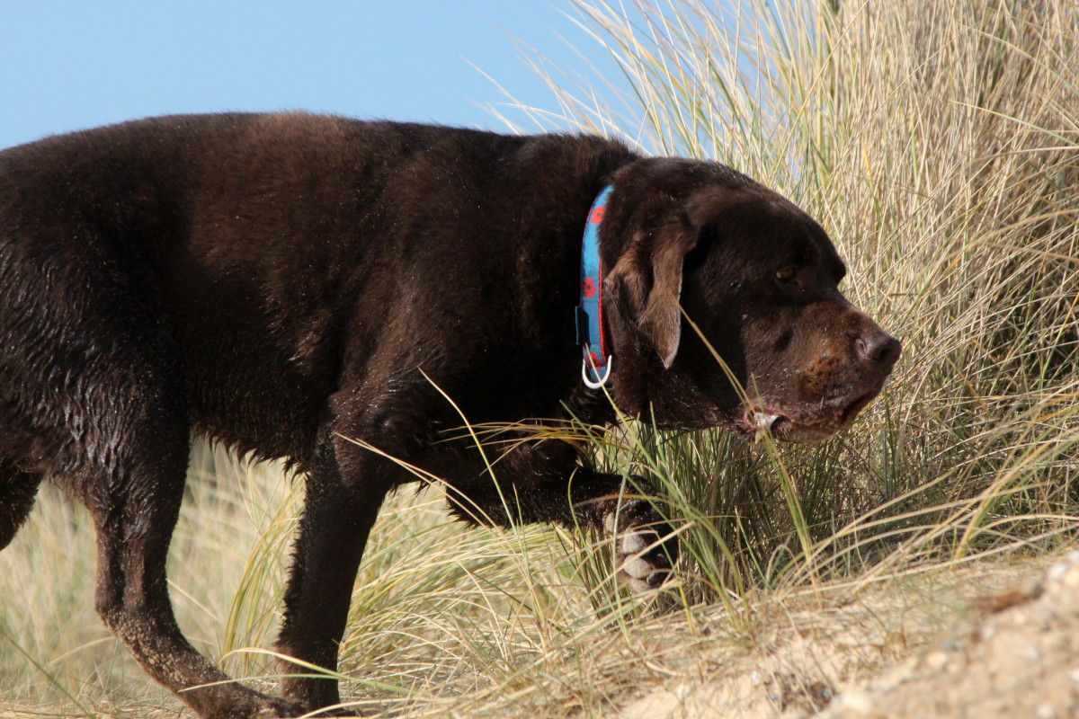 Sandy dunes are one of the locations where you might find an adder