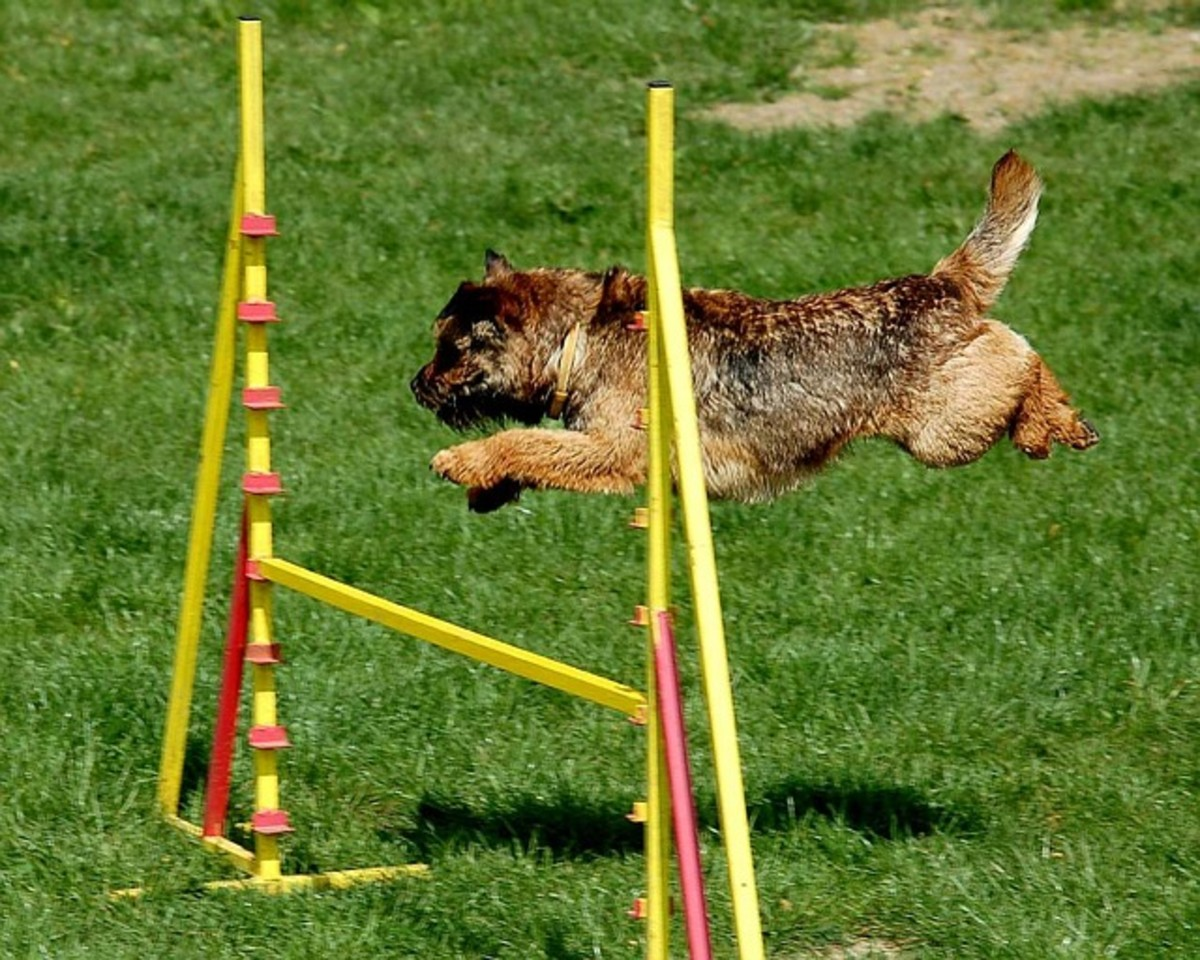 When dogs jump, their tails tend to flick upwards in mid-flight.