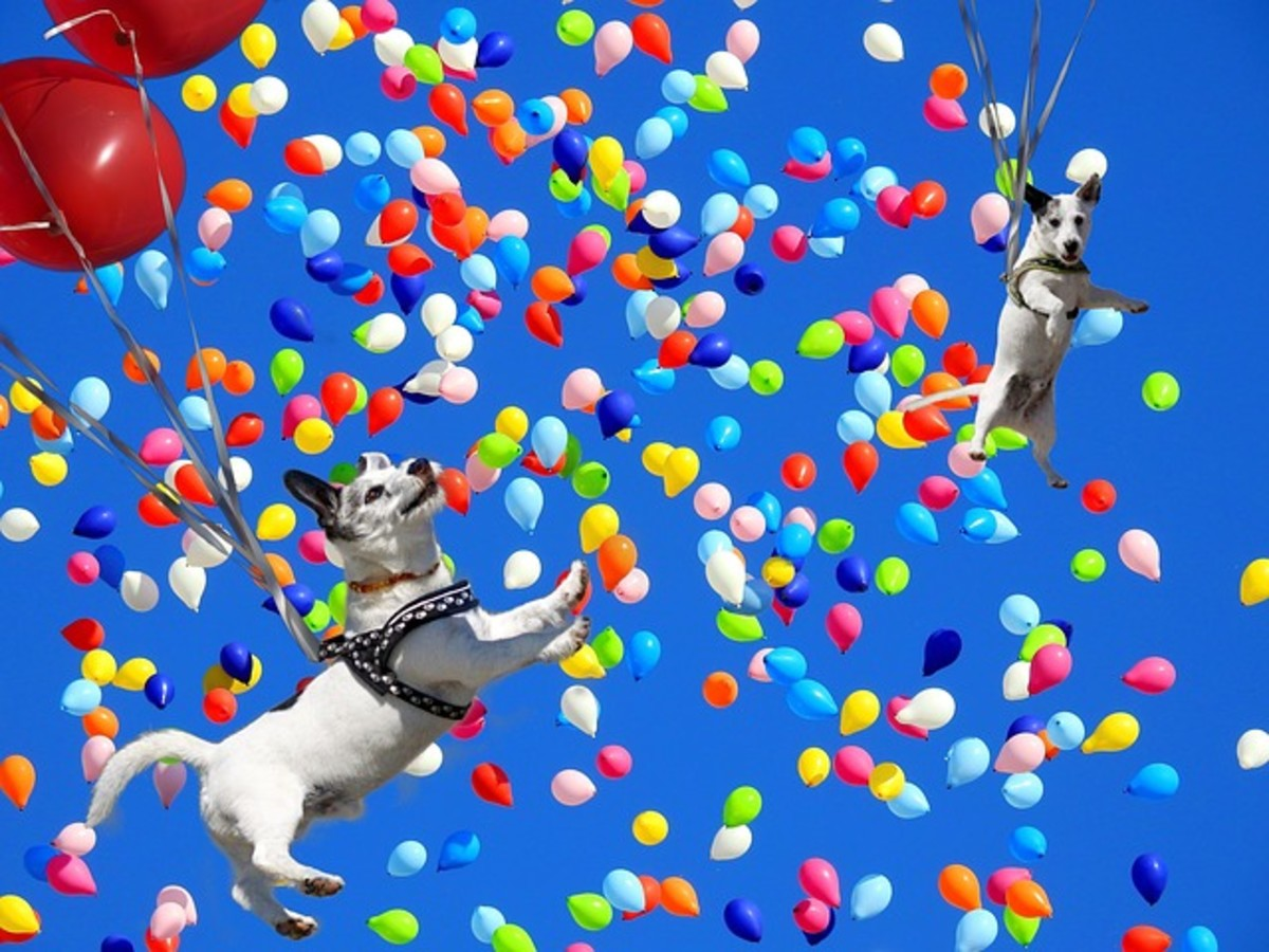 Dogs chasing balloons