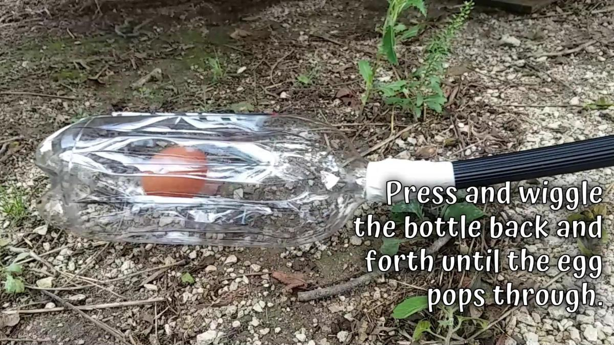 The egg will pop up into the bottle, and the strips of plastic will hold it in place.