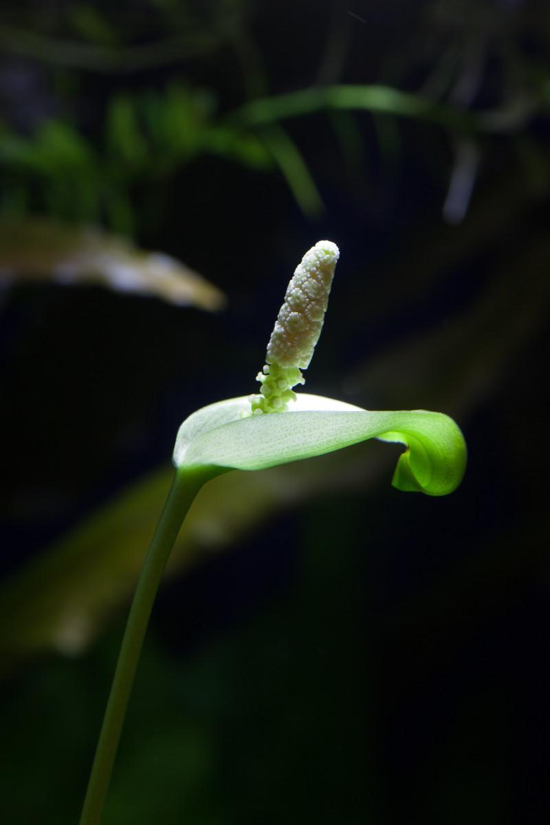 easy-and-best-aquarium-plants