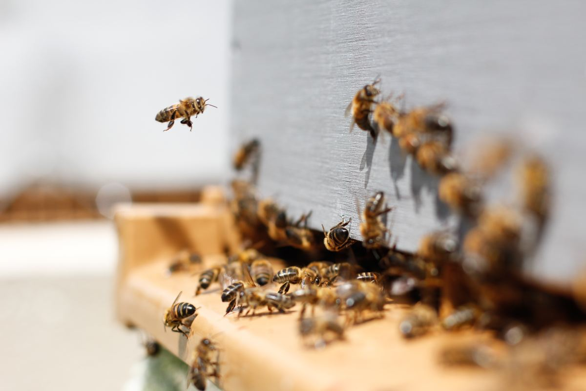 Set up the hive before ordering your bees.