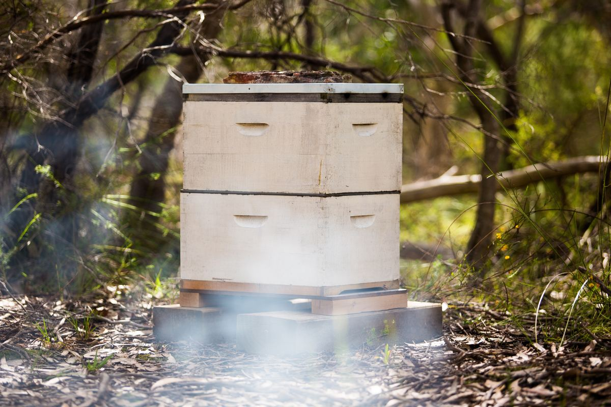 Consider multiple variables when picking a location for the hive.