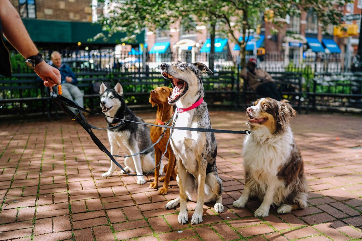 """Dogs that are """"over the threshold"""" might not respond to food."""