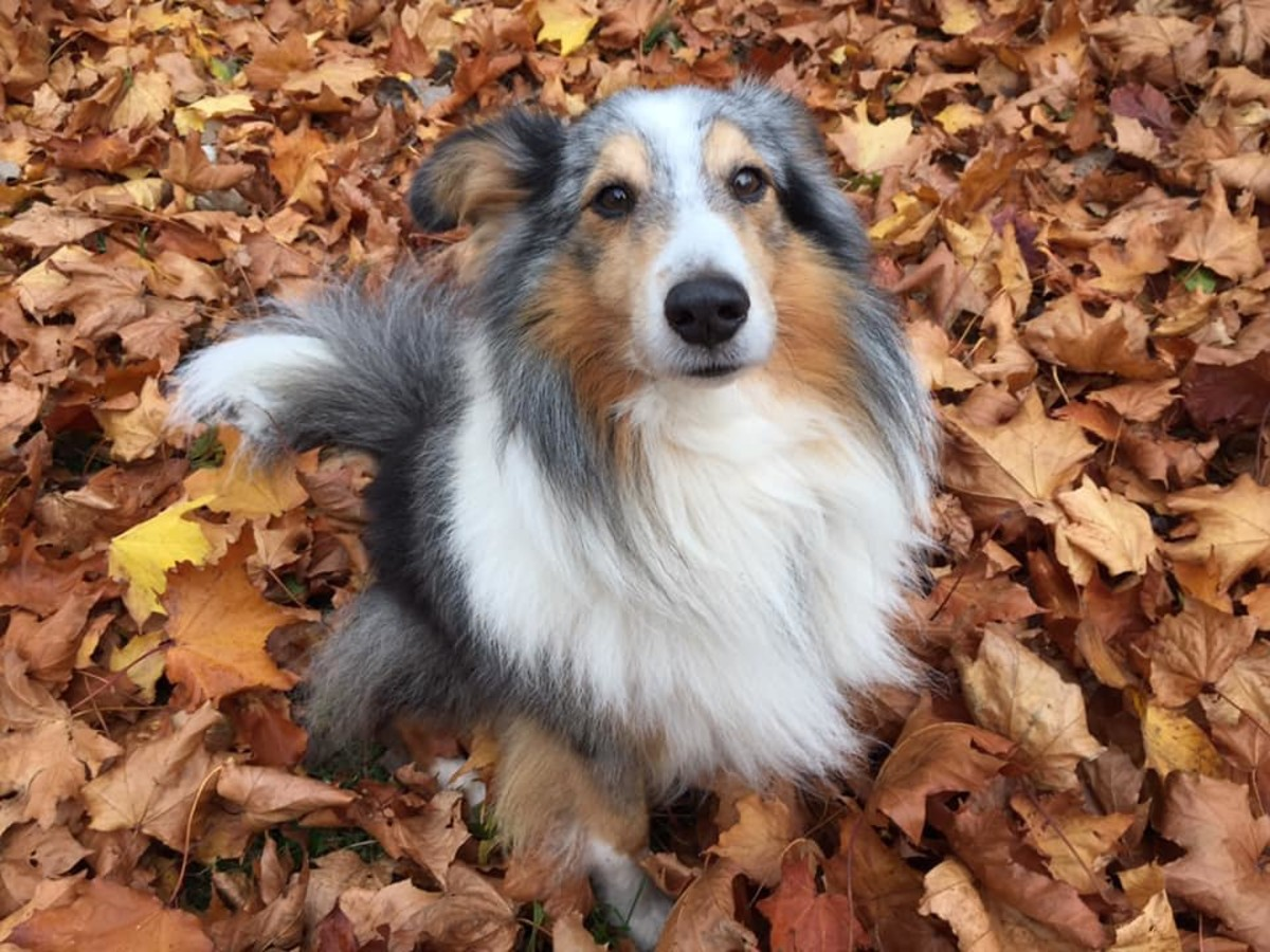 The changing weather through autumn and winter may cause SAD symptoms in dogs