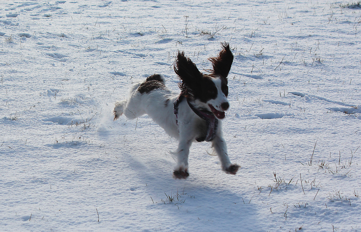 Getting outdoors in winter is a good way of cheering up ourselves and our dogs