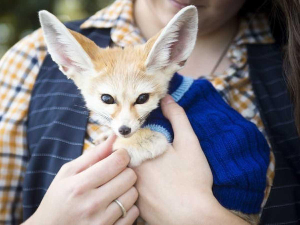 Felix, a pet and ambassador for his species.