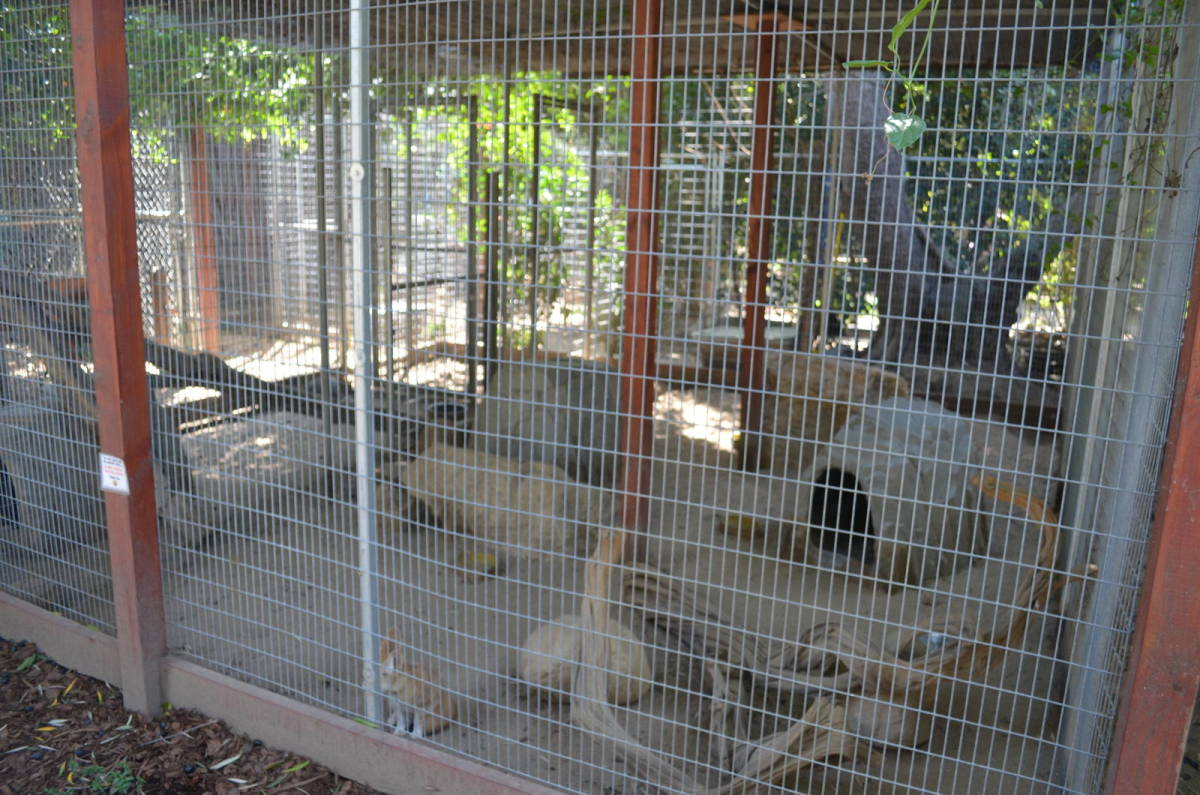 "Fennec enclosure at the ""Wildlife Learning Center"""