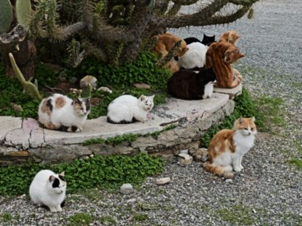 Feral cats seeking warmth by body heat between them. Please provide shelter to keep cats out of the cold.