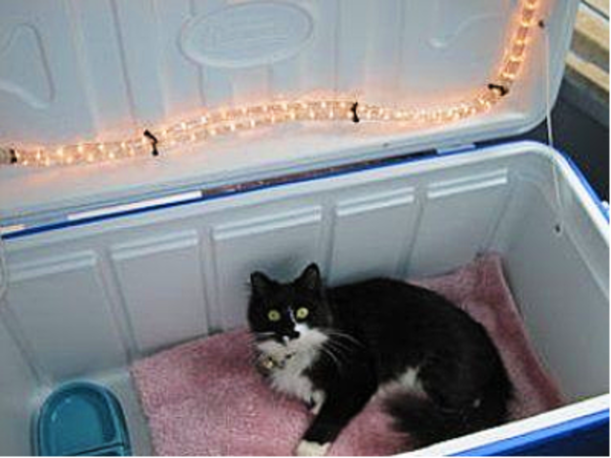 Feral kitty taking refuge in a insolated box!