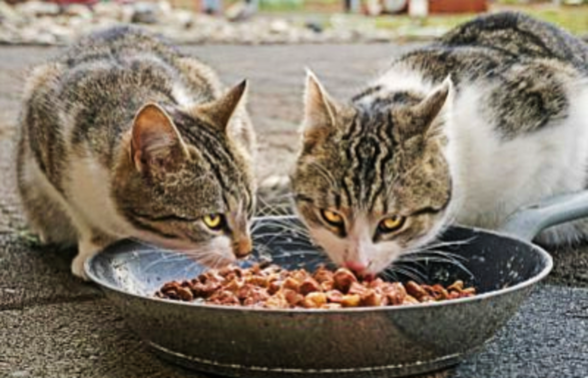 Feed feral cats wet food, this helps them stay a lot warmer in the cold months.