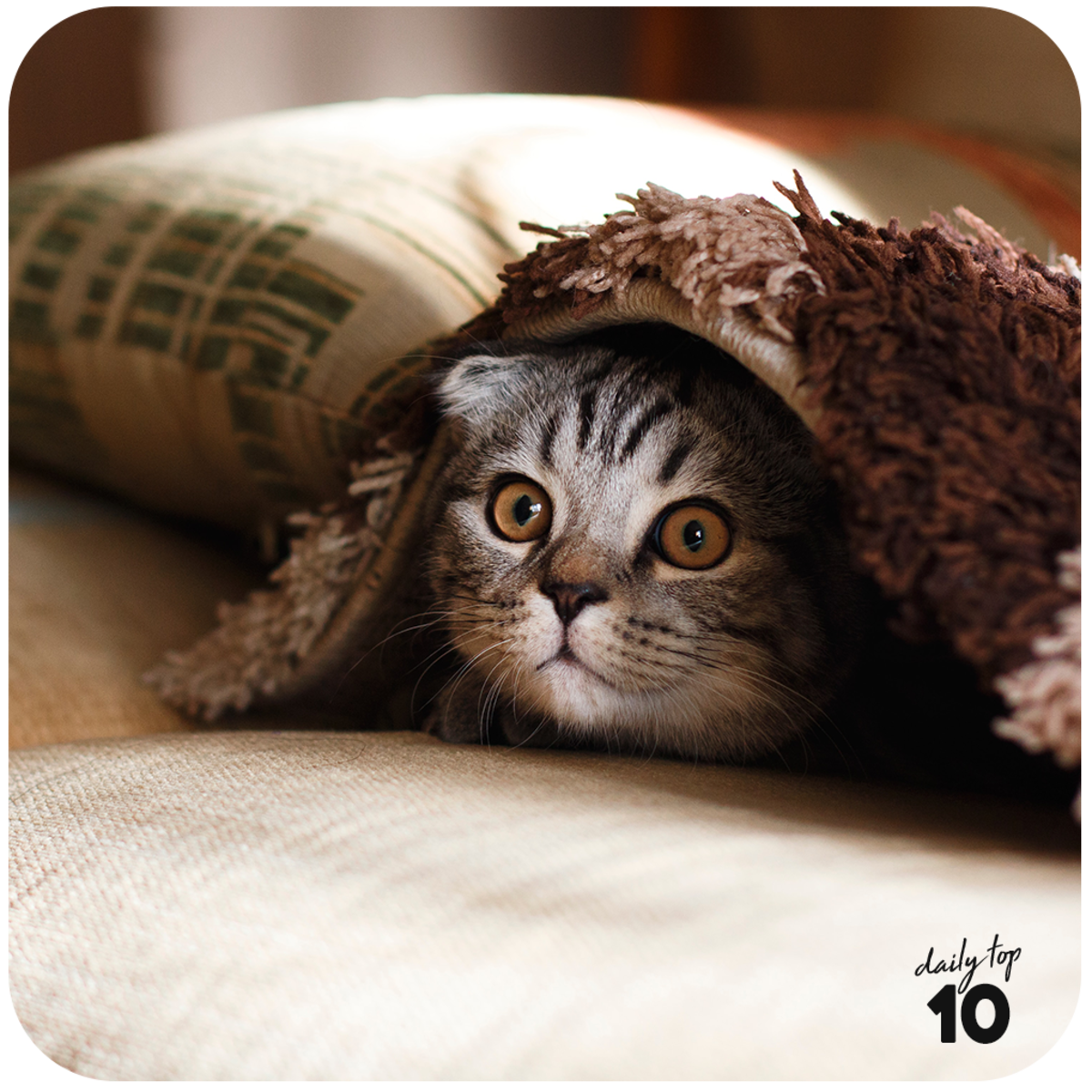 top-10-cutest-cat-photos-of-all-time