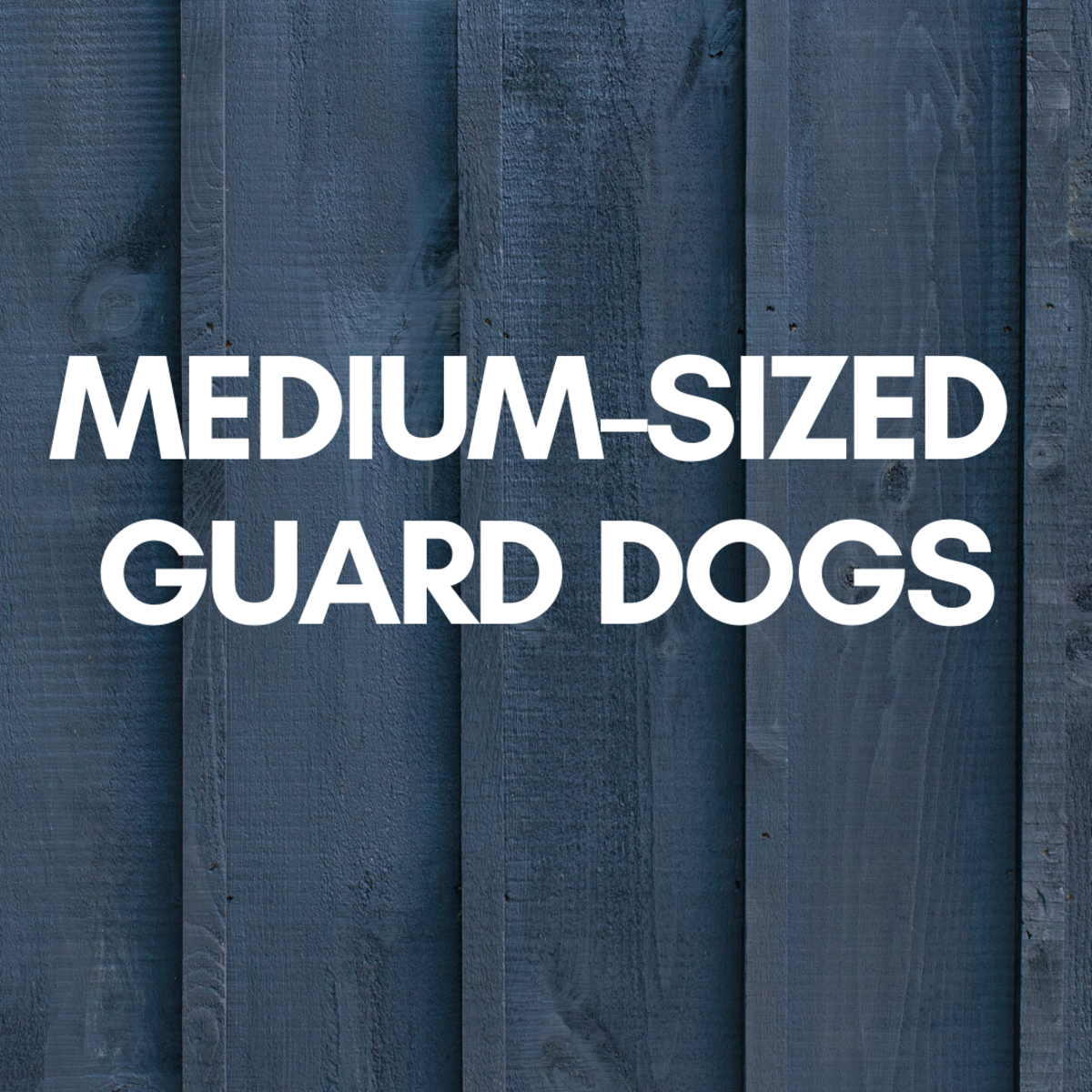 What About a Medium-Sized Guard Dog?