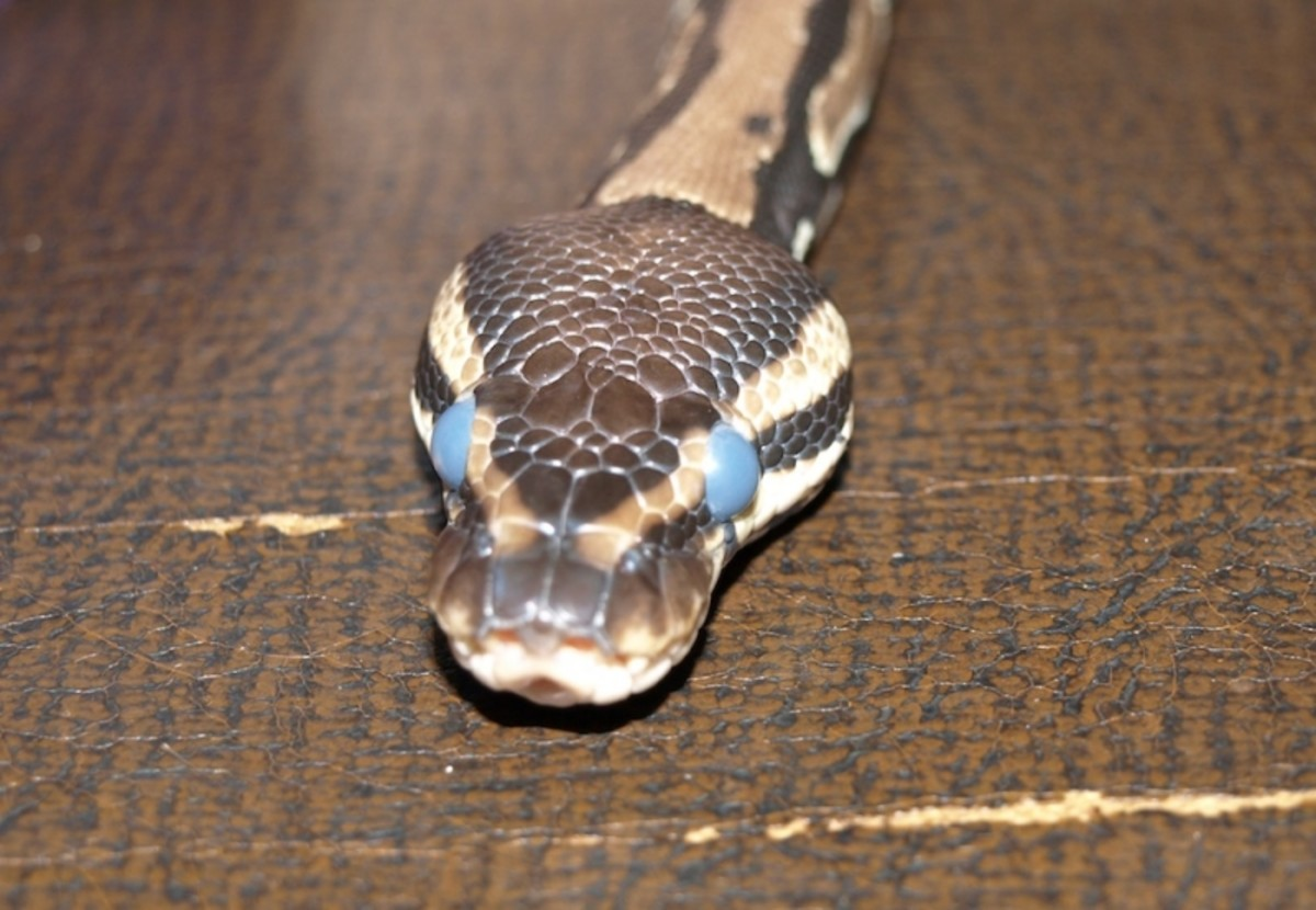 Eyes are ready to shed