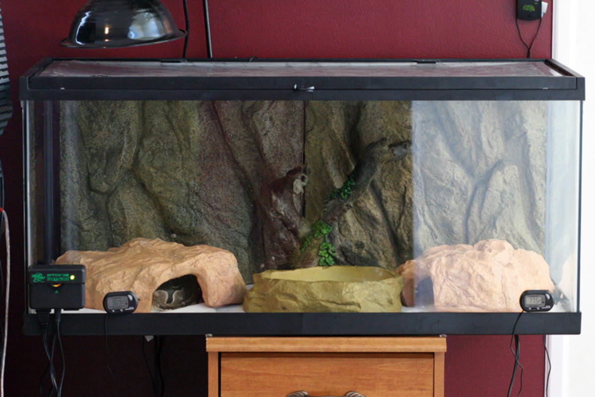 Set up with two hide spots, a water dish and basking area.