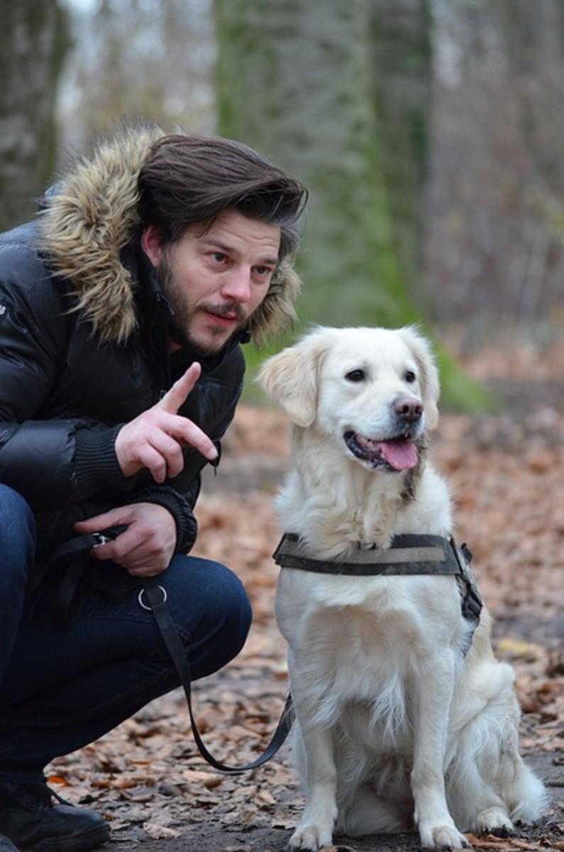 Man instructing dog
