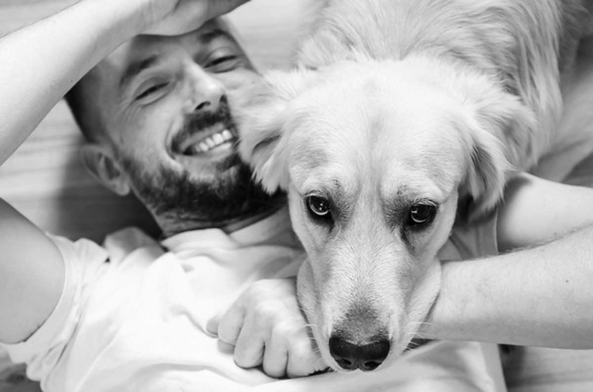 Dog laying on man's chest