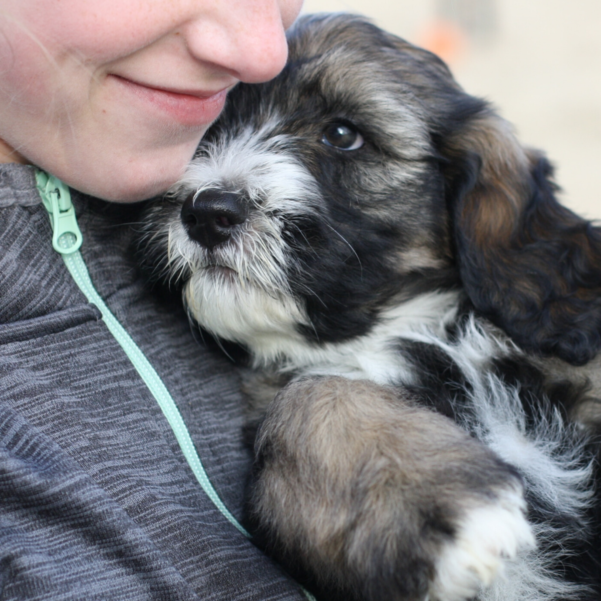 Know what type of environment your puppy comes from, and only work with ethical breeders.