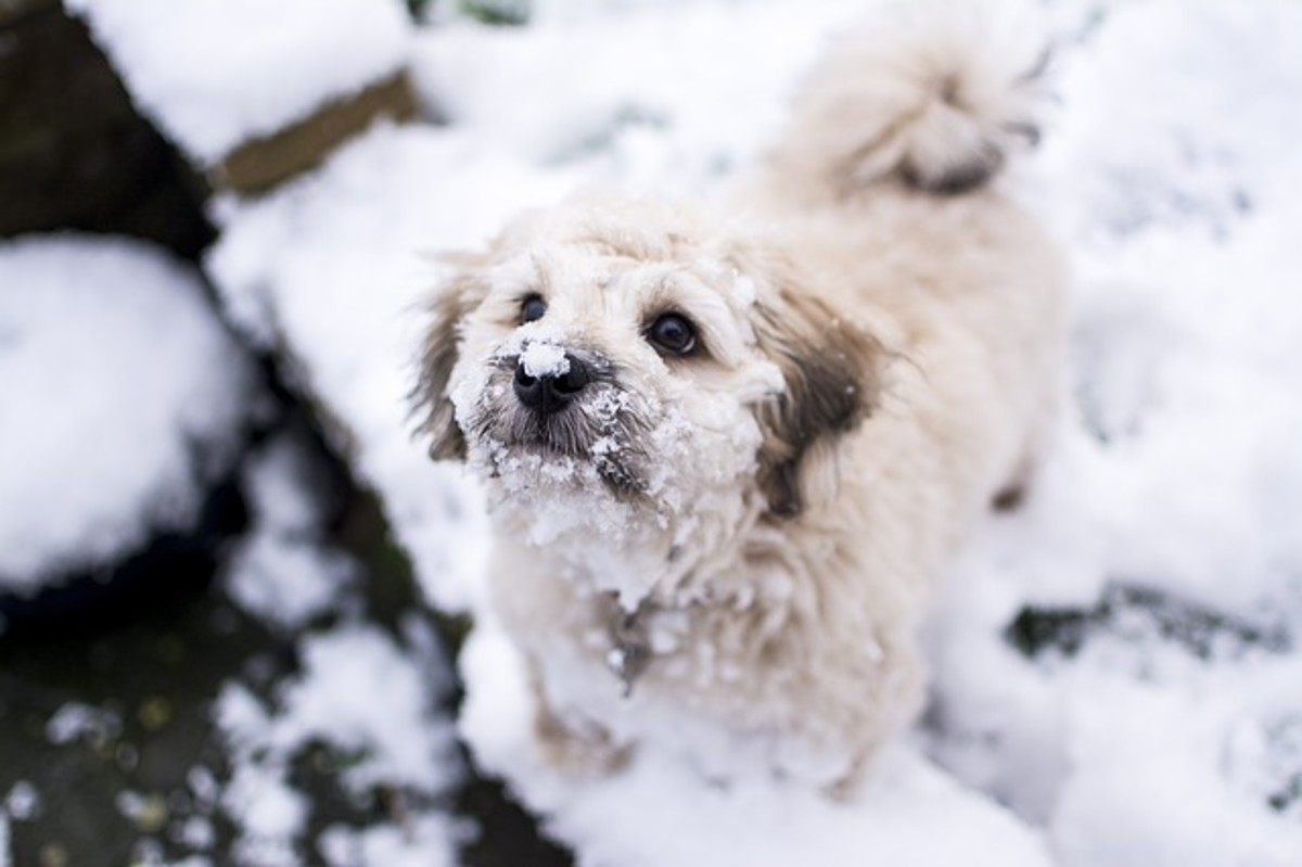 For some dogs, being sent outside to potty in the cold feels like punishment.