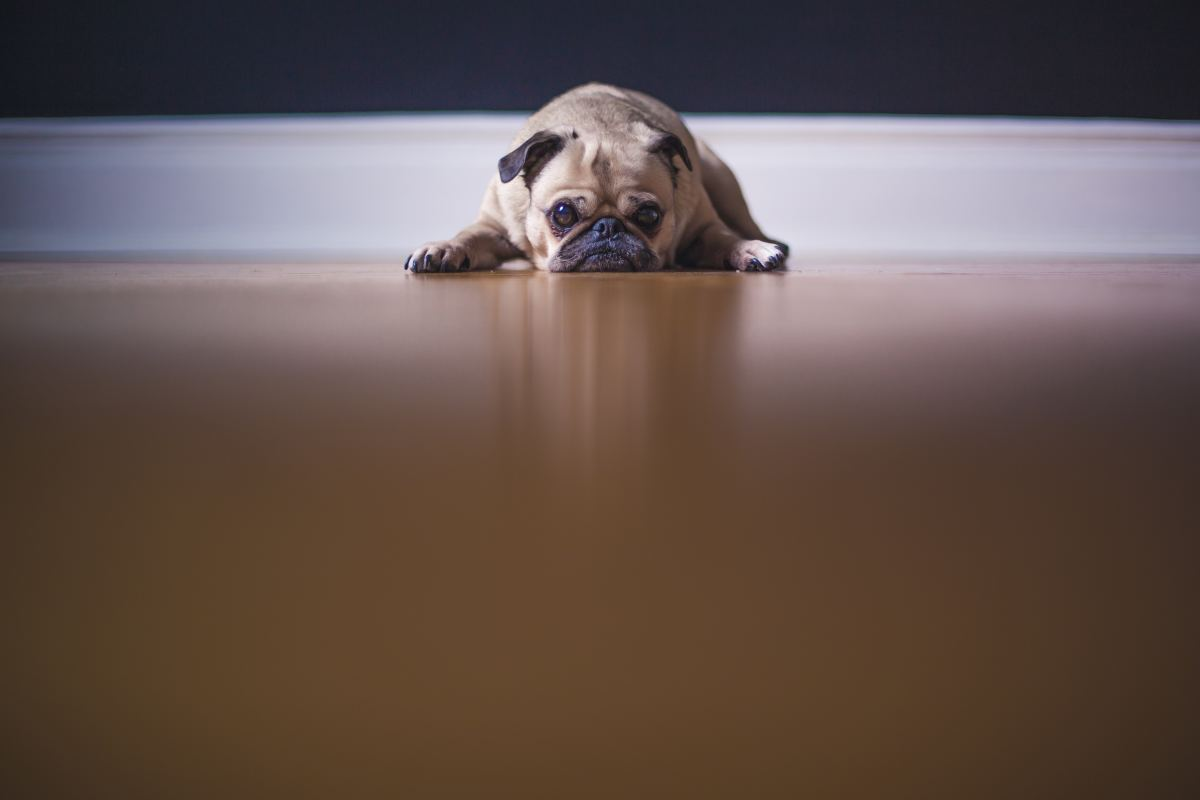 Learn what to do and what not to do if your dog has an accident indoors.