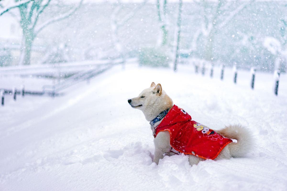 Invest in winter attire.