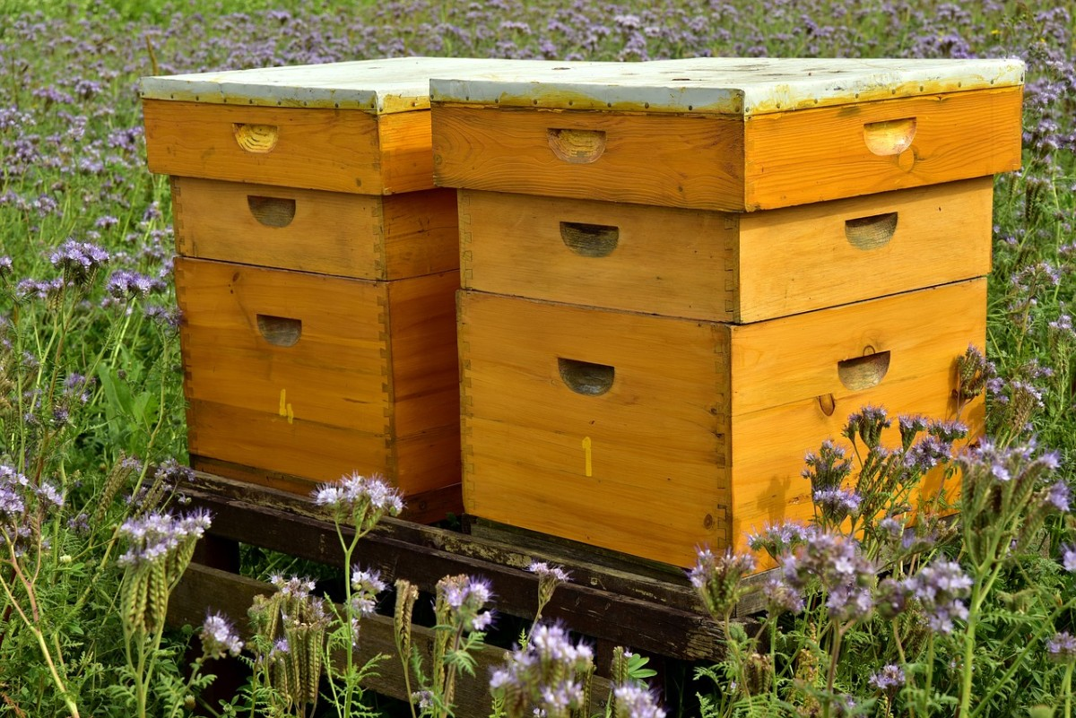 There's something immensely calming about well kept bee boxes located in a natural setting.