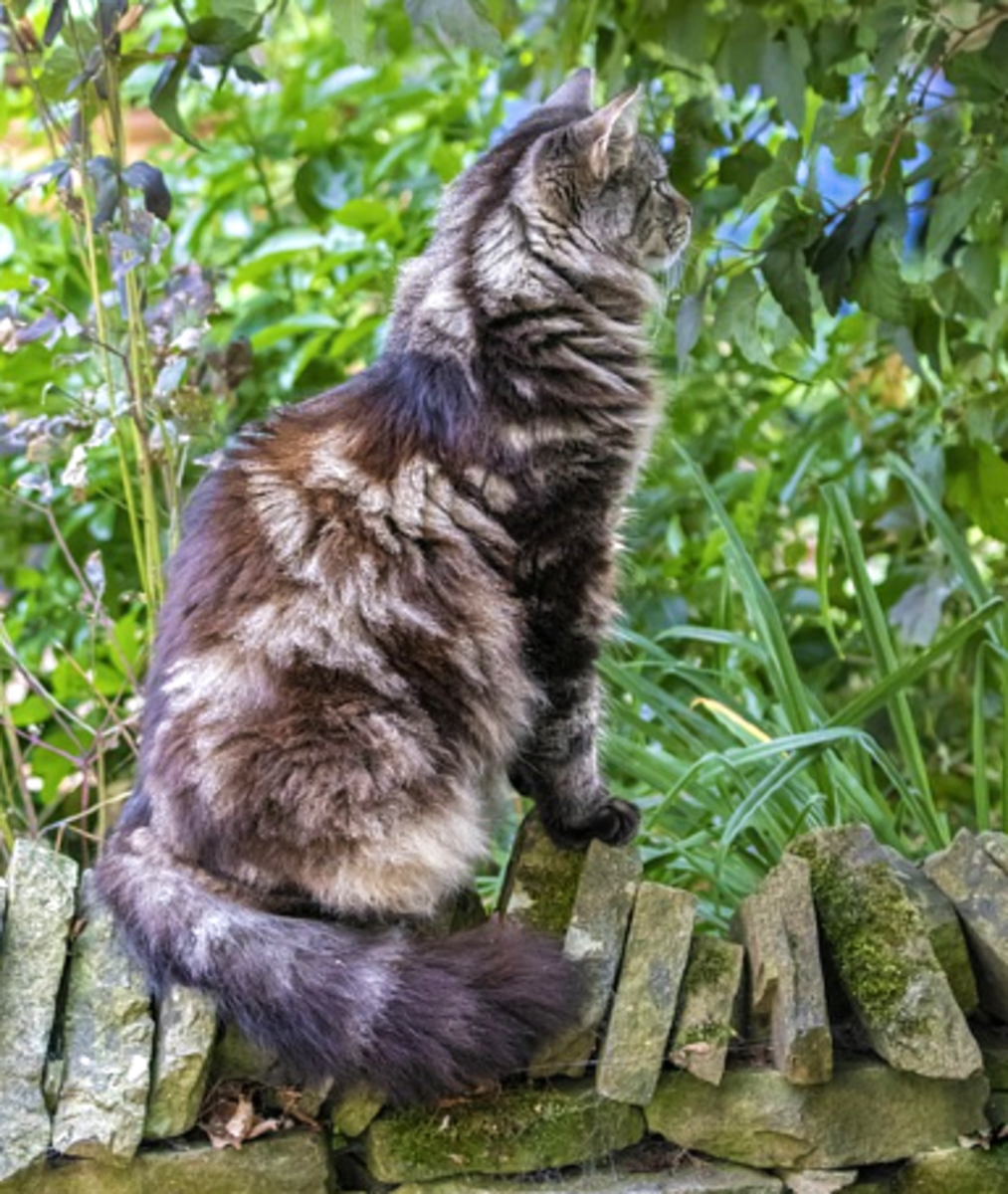 Cats instinctively know how to survive in the wild.