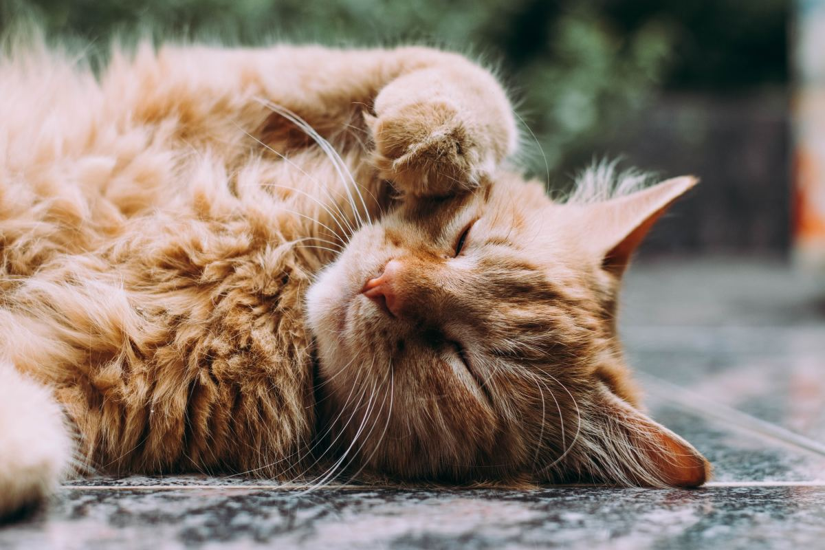 Cats sleep an average of 15 hours a day.